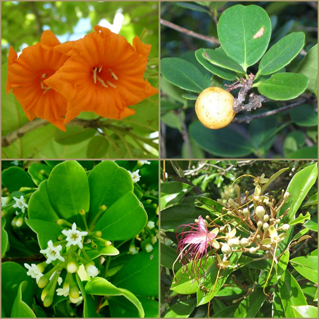 Examples of native vegetation